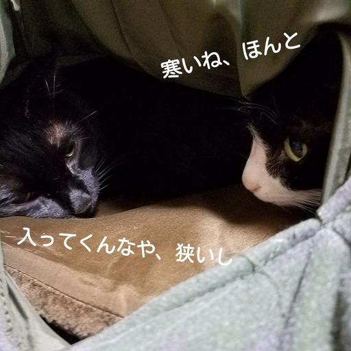 Fotor_151157236250040.jpg