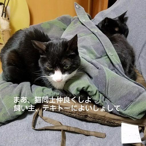 Fotor_151157324404828.jpg