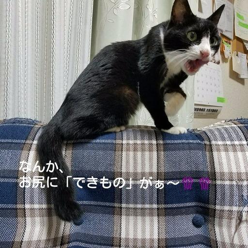 Fotor_151186524361720.jpg