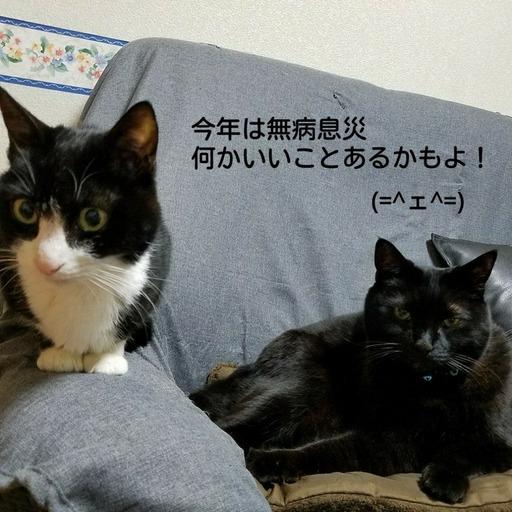 Fotor_151476198112045.jpg