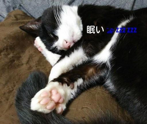 Fotor_151545965065687.jpg