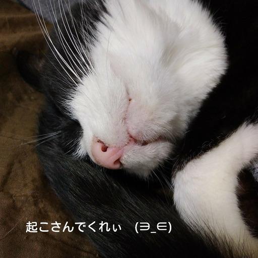 Fotor_151545982348412.jpg