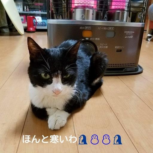 Fotor_151711484200299.jpg