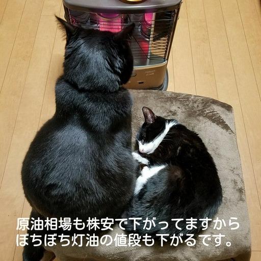 Fotor_151832085053431.jpg
