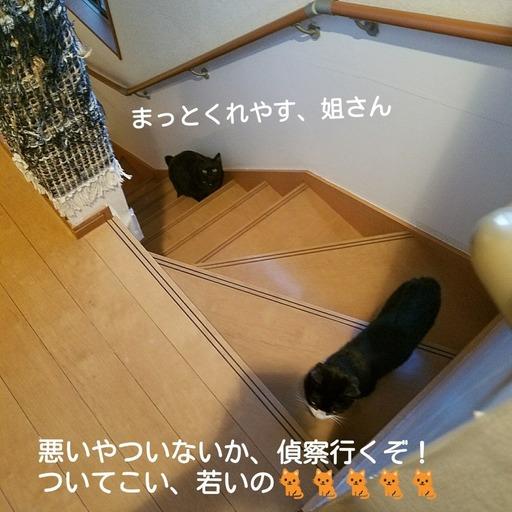 Fotor_15192038845688.jpg