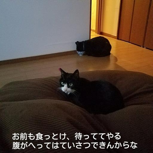 Fotor_151920625969186.jpg