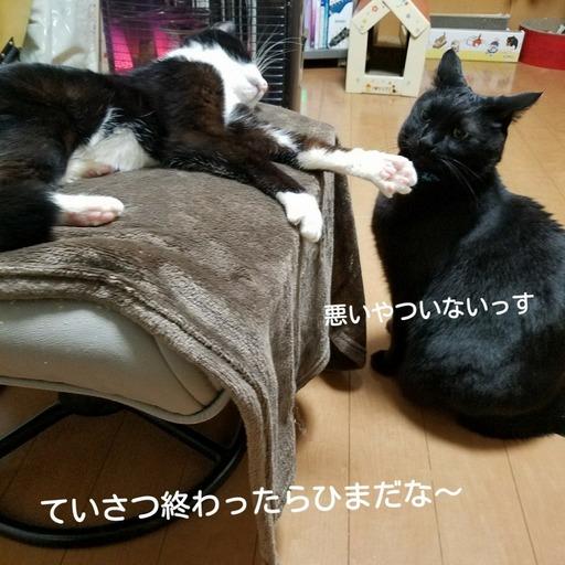 Fotor_151920685093812.jpg