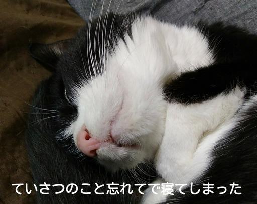 Fotor_15192074387063.jpg