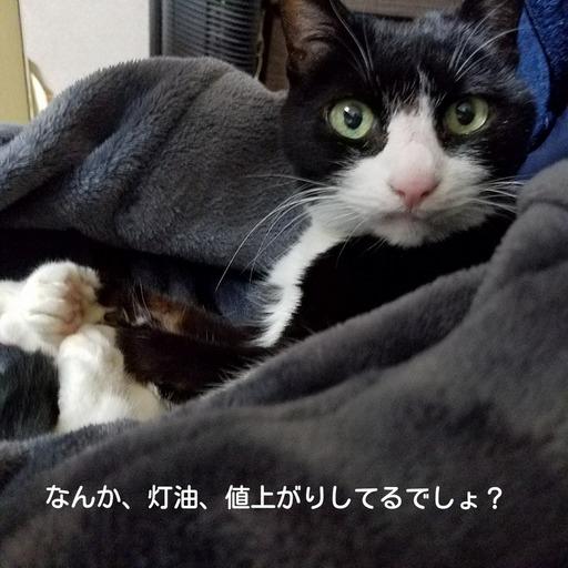 Fotor_151711643213321.jpg